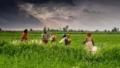 नए कृषि क़ानून को समझिए